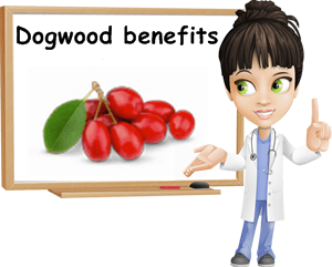 Dogwood benefits
