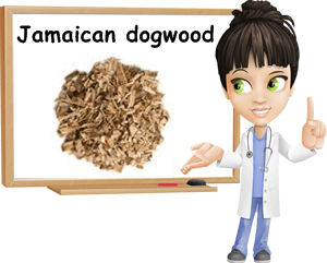 Jamaica dogwood benefits