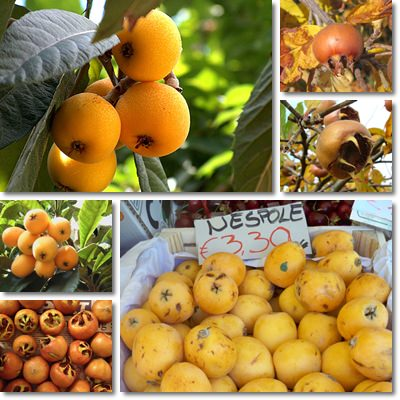 Properties and Benefits of Loquat