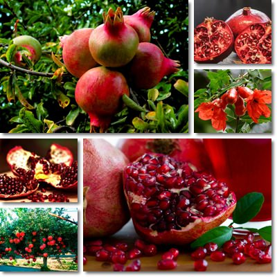 Properties and Benefits of Pomegranate