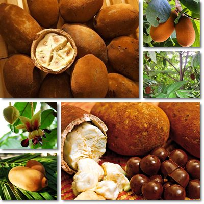 Properties and Benefits of Cupuaçu