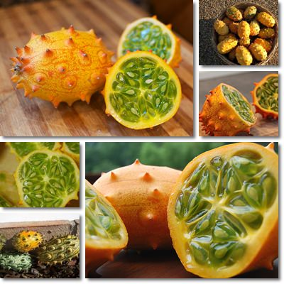 Properties and Benefits of Kiwano