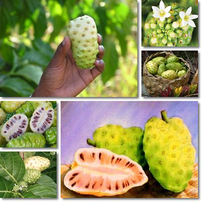 Properties and Benefits of Noni