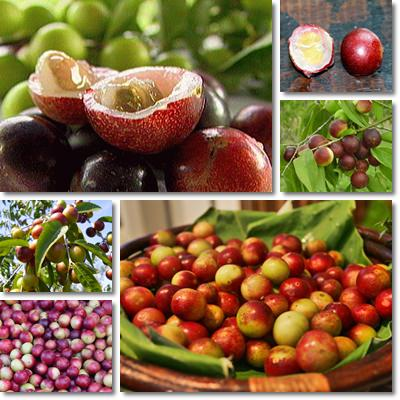 Properties and Benefits of Camu Camu