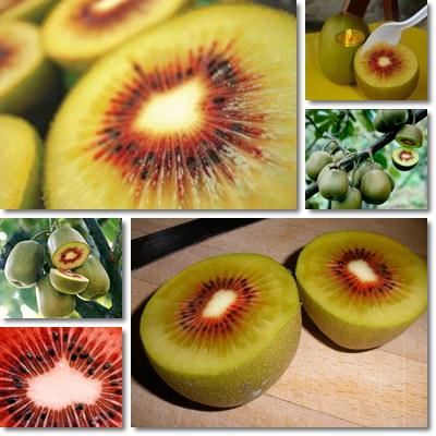 Properties and Benefits of Golden Kiwifruit