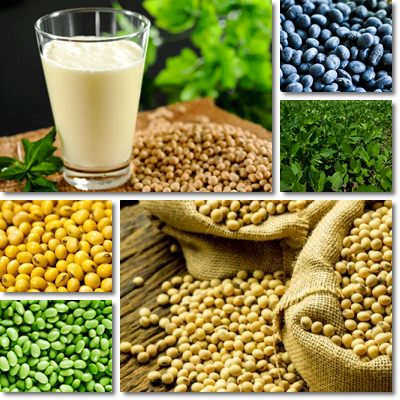 Properties and Benefits of Soy
