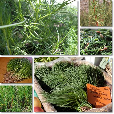 Properties and Benefits of Agretti