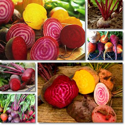 Properties and Benefits of Beetroot