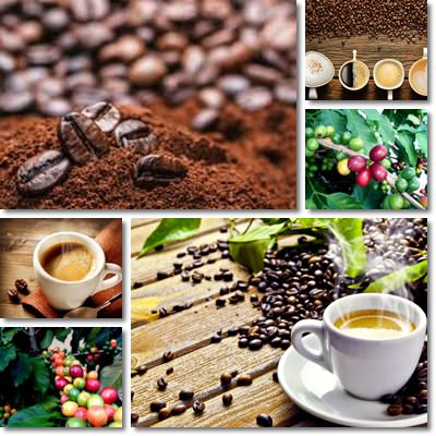 Properties and Benefits of Coffee