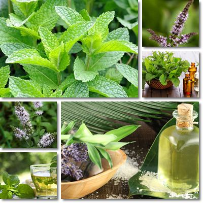 how to make peppermint tea with peppermint extract
