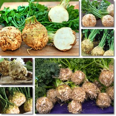 Properties and Benefits of Celeriac