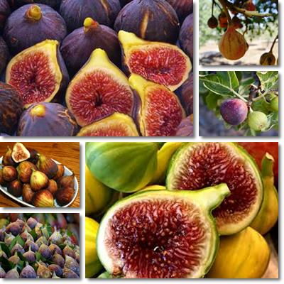 Properties and Benefits of Figs