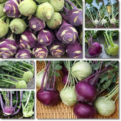 Properties and Benefits of Kohlrabi