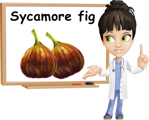Sycamore figs benefits