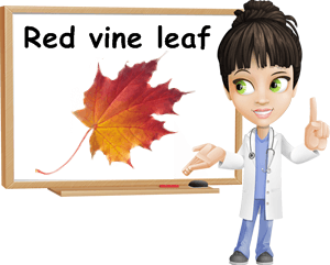 Red vine leaf benefits