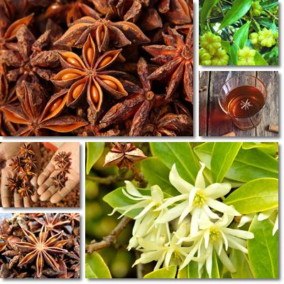 Properties and Benefits of Star Anise