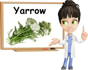 Yarrow benefits