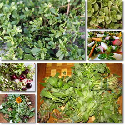 Purslane recipe ideas