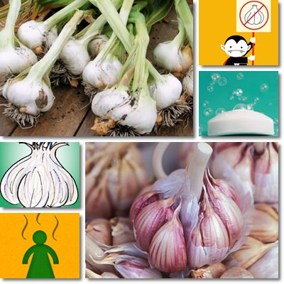 Garlic body odour