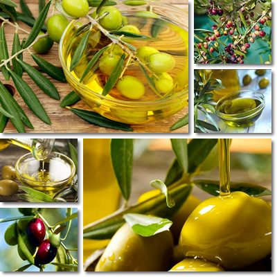 Properties and Benefits of Olive Oil