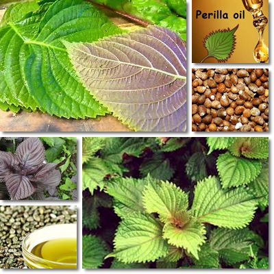 Perilla seed oil properties