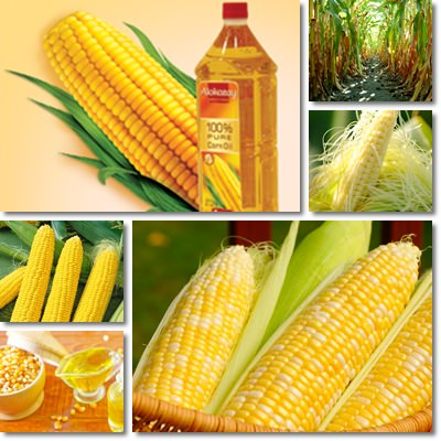 corn oil benefits