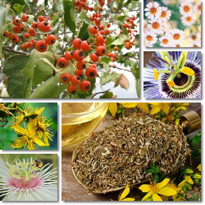 Best anxiety herbal remedies