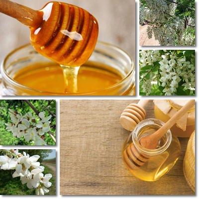 Acacia honey properties