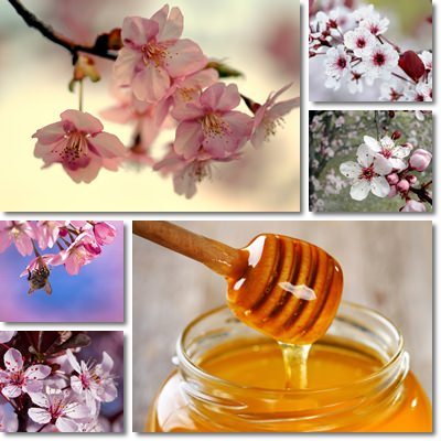Cherry blossom honey