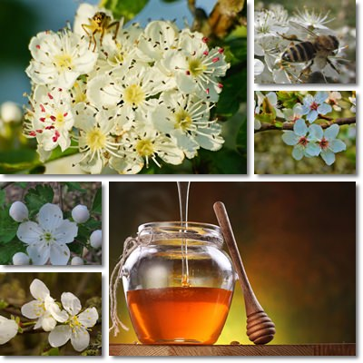 Hawthorn honey