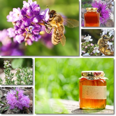 Properties and Benefits of Thyme Honey