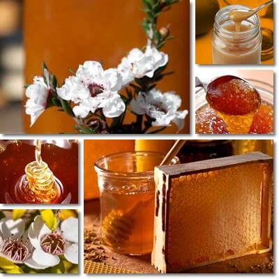 Manuka honey New Zealand benefits