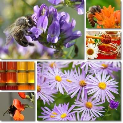 Polyfloral honey properties