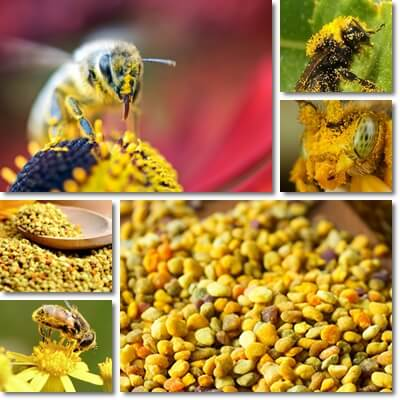 Bee pollen properties