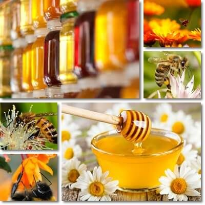 Monofloral honey properties