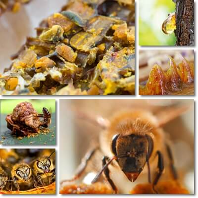 Properties and Benefits of Propolis