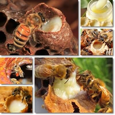 Royal jelly health benefits