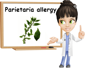 Parietaria pollen allergy