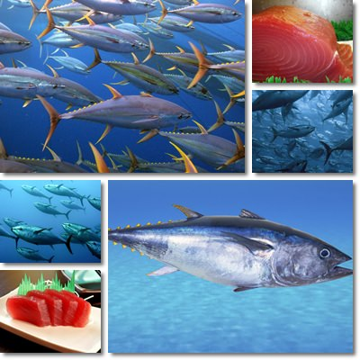 Tuna health benefits