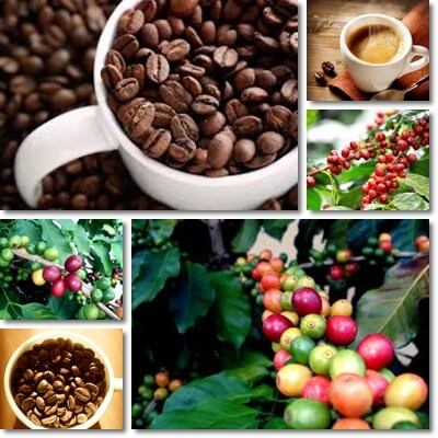 Coffee health benefits