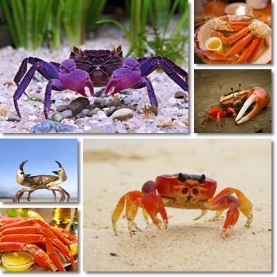 Properties and Benefits of Crab Meat