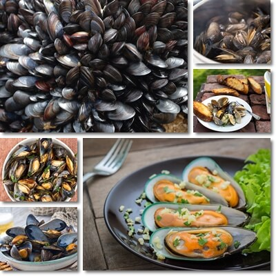 Properties and Benefits of Mussels
