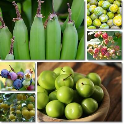 Unripe fruit side effects