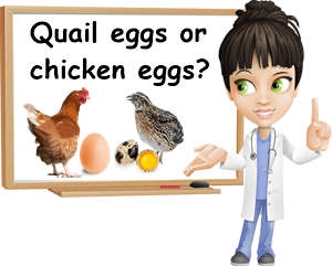 Quail or chicken eggs