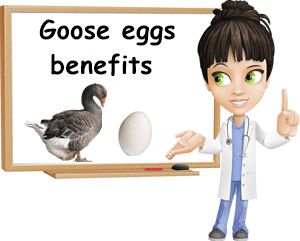 Goose eggs benefits