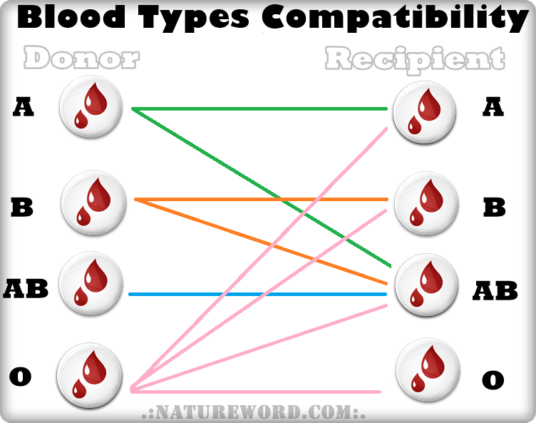 Blood types simple compatibility