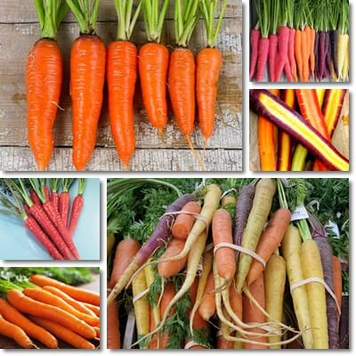 Different Carrot Colors Nutrition