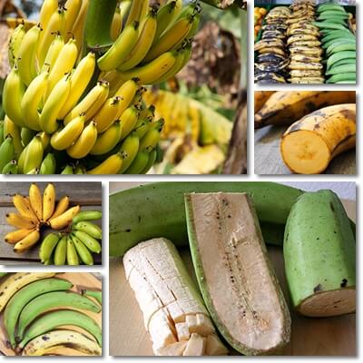 Banana vs plantain differences