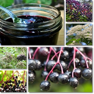 Elderberry syrup uses