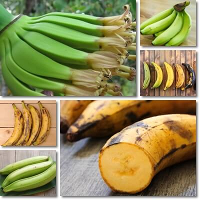 Properties and Benefits of Plantains